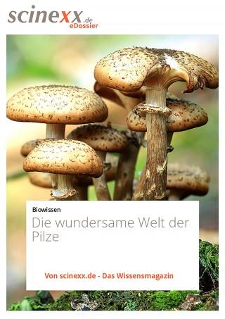 Nadja Podbregar: Die wundersame Welt der Pilze