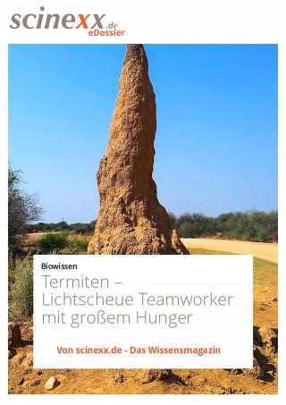 Dieter Lohmann: Termiten