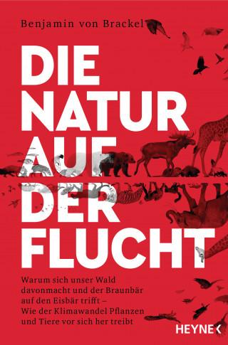 Benjamin von Brackel: Die Natur auf der Flucht